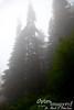 Foggy, foggy day.  Can you find Zac?