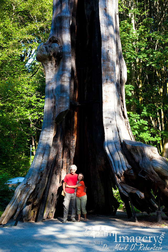Hollow Tree in Stanley Park.  You can see the metal reinforcement pipes embedded into the ground to keep this landmark from falling apart.