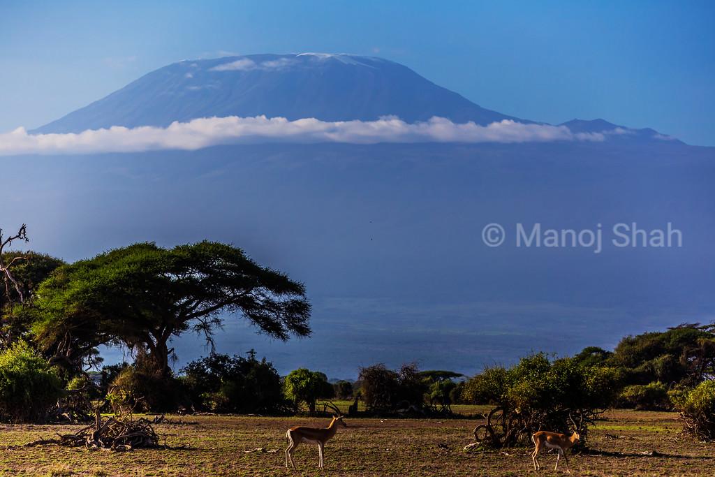 Mount Kilimanjaro in Amboseli National Park