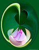 Lotus En Pointe Orbital