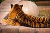 Animal Kingdom -- Tiger's Distain