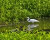 McKee-Beshers Marsh 7-27-09-17