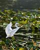 McKee-Beshers Marsh 7-27-09-30