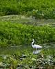 McKee-Beshers Marsh 7-27-09-12