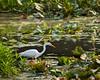 McKee-Beshers Marsh 7-27-09-8