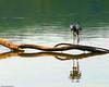 Heron on Potomac 7-27-09-7