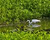 McKee-Beshers Marsh 7-27-09-16