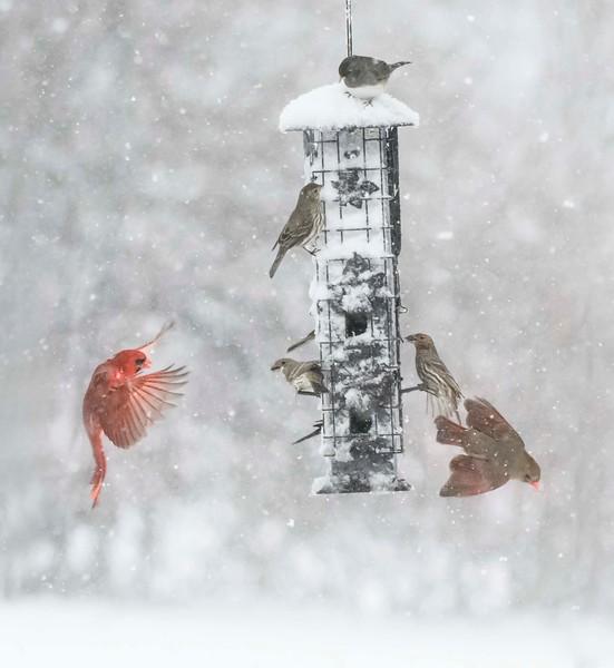 新华 - 雪中嬉鸟