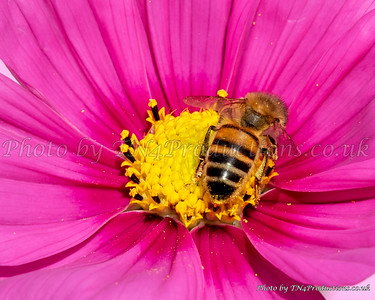 Bee close-up in flower