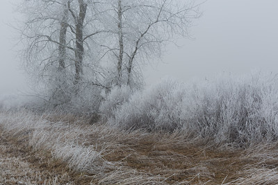 Fog & Frost