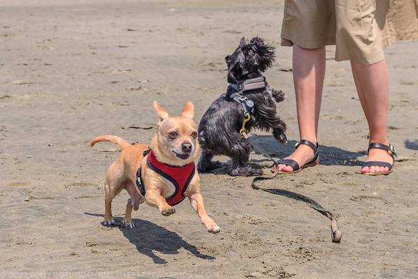 2018 FUN: RUDY AND WHISKEY AT THE BEACH