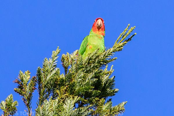2016 FUN: BIRDS