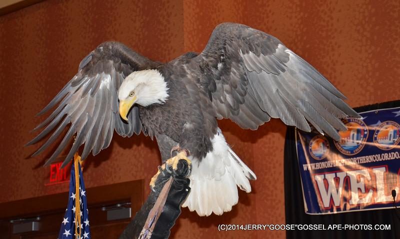 THE AMERICAN EAGLE!