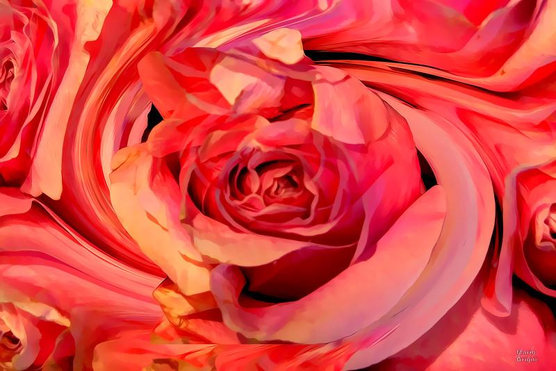 Fresh Market roses