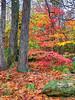 fall color rock garden