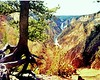 1968 WY Yellowstone grand canyon
