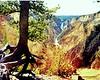 1968 WY Yellowstone grand canyon
