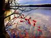 Lake Brandt last leaves