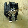 mama cat's offering