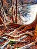 Tangle of roots along  lake Brandt shore