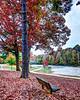 Greensboro Country Park
