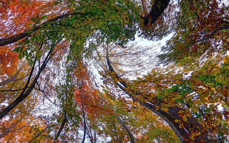 forest twirl
