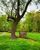 Bicentennial garden crocked tree