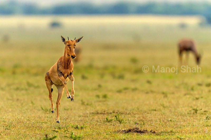 atopi baby is full of energy in the early morning and thus stats running and jumping in Masai Mara.
