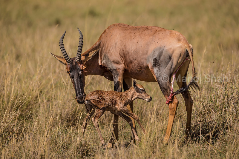 Topi mother with new born baby