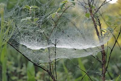 Double Web