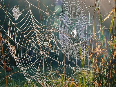 Three Webs