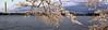 TIDAL BASIN CHERRY BLOSSOM PANORAMA