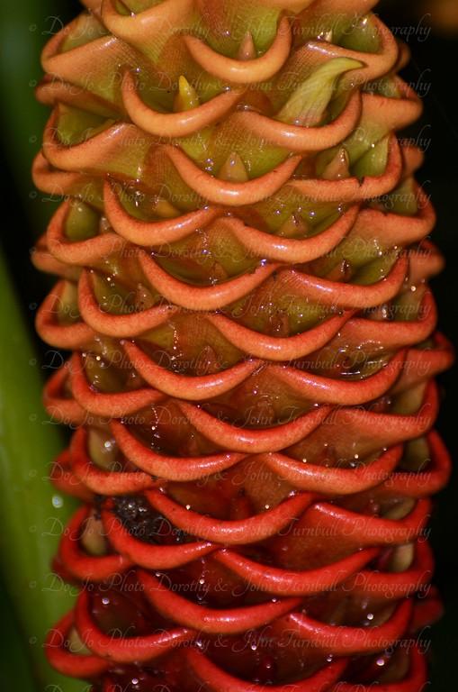 Finca Los Monos Botanical Garden Panama