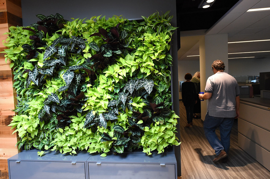 . A living wall of plants in the green space lounge.  (Pioneer Press: Jean Pieri)