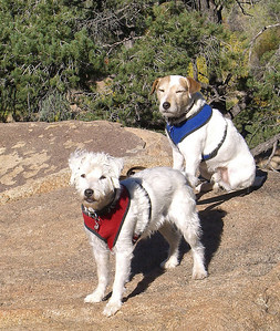 10/30/10, BillyJack looks like he wishes he could just curl up and nap instead of hike!