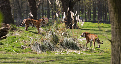 Woburn Safari, 13th April 2014