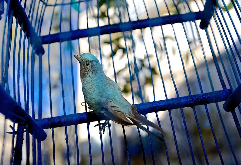 Caged Bird.  Montpellier, France