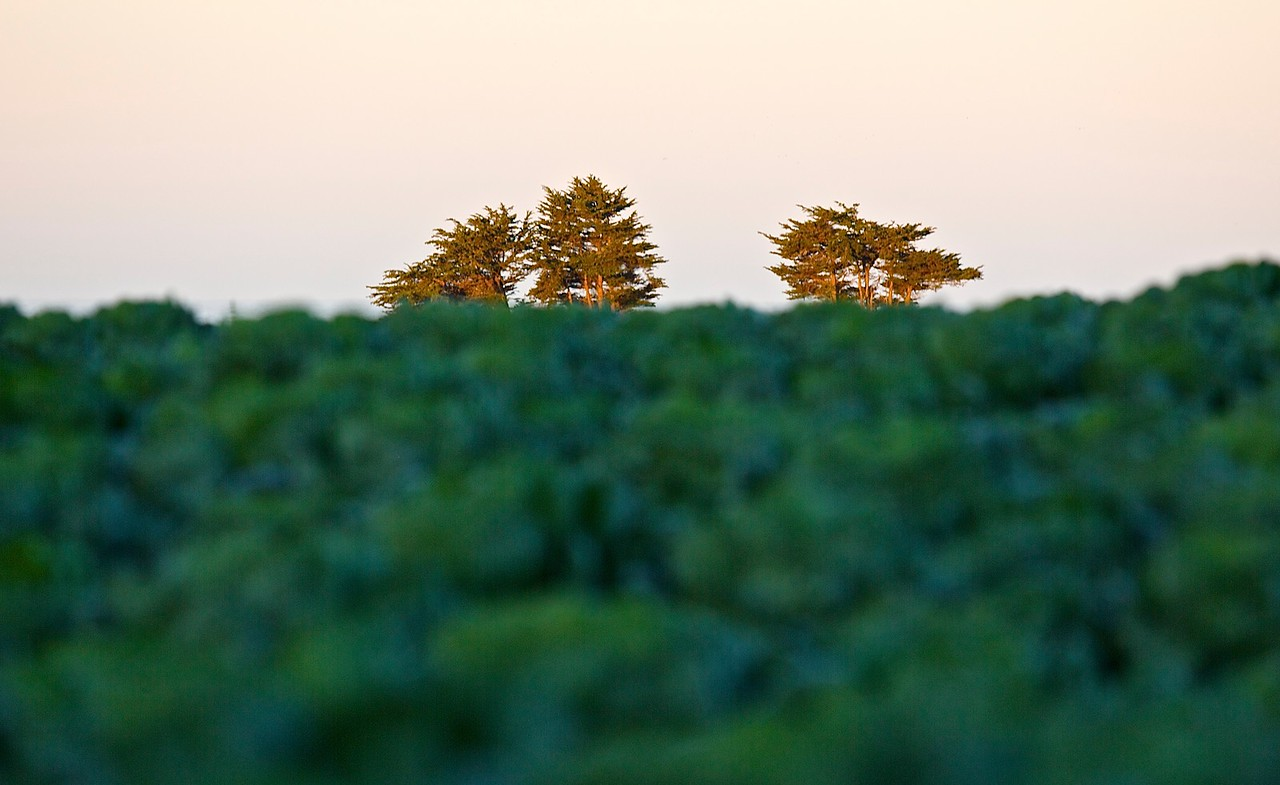 Trees On The Horizon