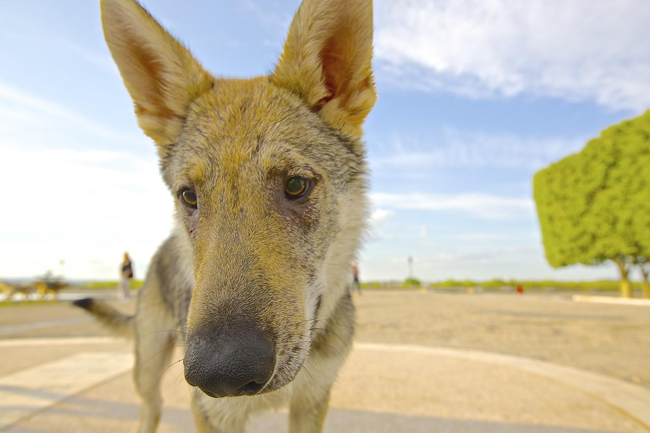 Sad Dog.  Montpellier.
