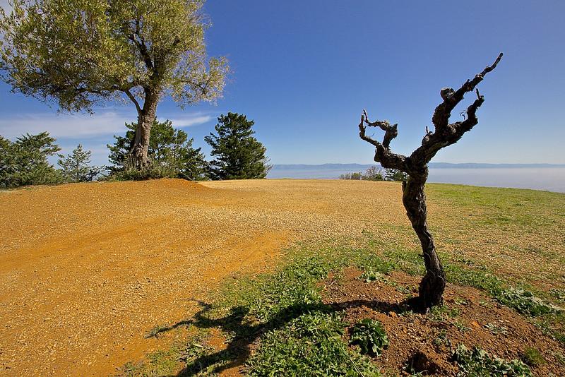 Dancing Vine.  Ridge Winery.  Monte Bello.