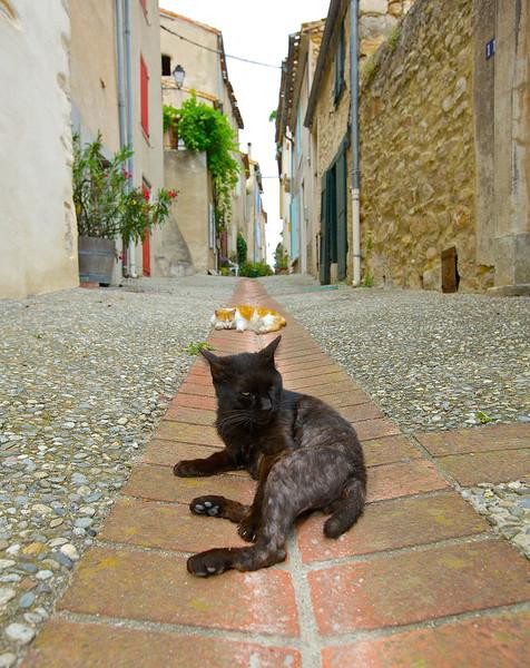 Stray Cats.  Montolieu, France.