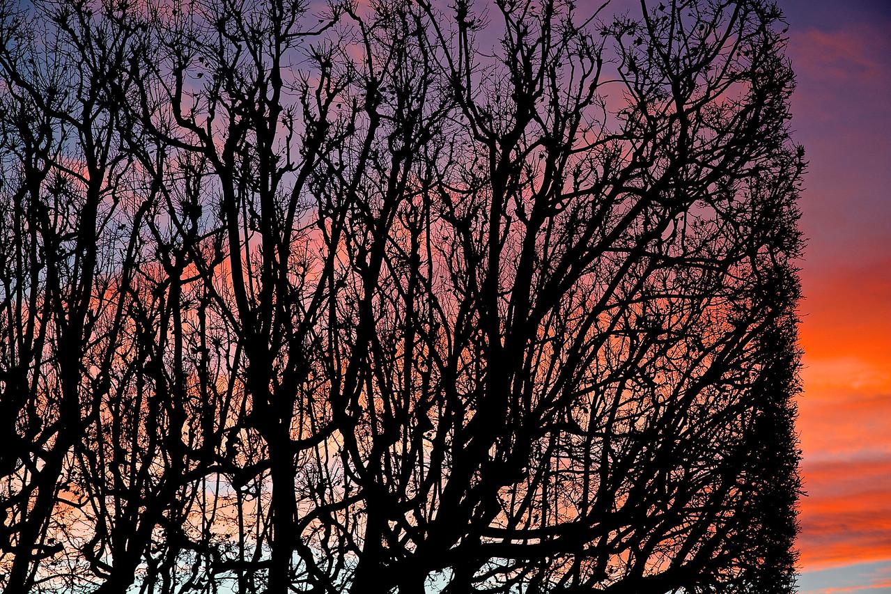 Sunset Trees.  Montpellier, France