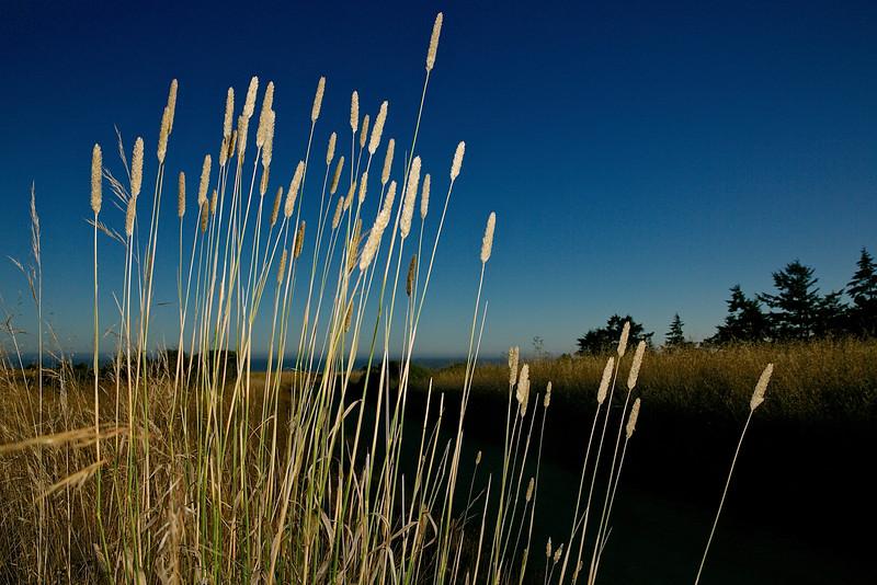 Native Grasses.  Wilder State Park.