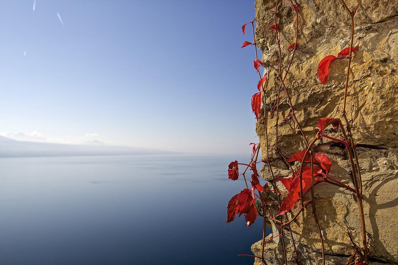 Ivy.  Lake Geneva, Switzerland