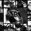 GIDGET Collage2