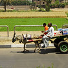 Horse pulled buggy, spotted in Karnak, Egypt.