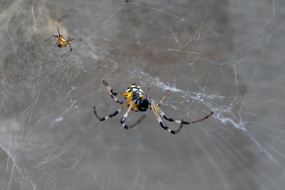 2019-02-10 - SPIDERS...