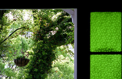 And from inside - wonderful shades of green, in leaves and glass.  A near Pissaro texture.
