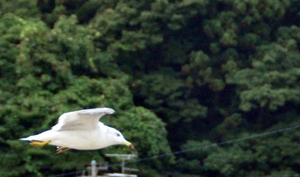 YUNOGAWA MORNING - 17 AUGUST 2011 (61)