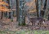 Fall Creek Falls State Park  -  Tennessee